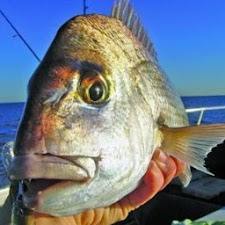 Guide to Fishing Adelaide