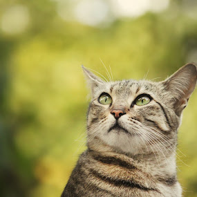 Attitude by Swapnil Khare - Animals - Cats Portraits ( #kitty #cat #portrait )
