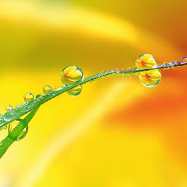 by Mahendra Mahendra - Nature Up Close Natural Waterdrops