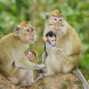 Monkey Family's by Irfan Hikmawan - Animals Other Mammals