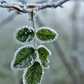 by Irena Klemenčič - Nature Up Close Leaves & Grasses