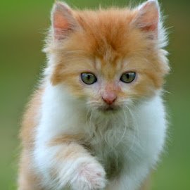 RUN!! by Gaz Makarov - Animals - Cats Kittens