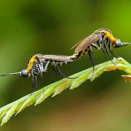 back to back by Dedi Kurniadi - Animals Insects & Spiders