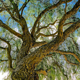 Nimble Nature by Barbara Brock - Nature Up Close Trees & Bushes ( large tree, willow tree, tree limbs, tree trunk )