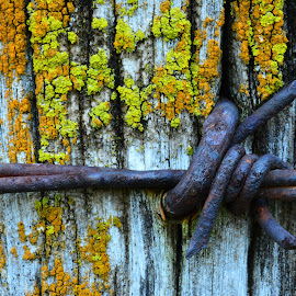 Barbed wire and post by Larry Strong - Artistic Objects Other Objects ( fence, wire, lichens, barbed wire )