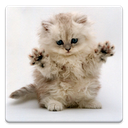 Cat Wallpapers! mobile app icon
