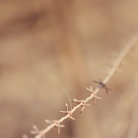 by Silke Jordaan - Novices Only Objects & Still Life ( farm, natural light, plaas, veld, barbed wire, brown, rust )