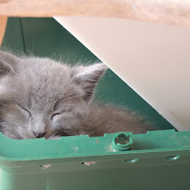 Taking a nap by Susan Hofer - Animals - Cats Kittens