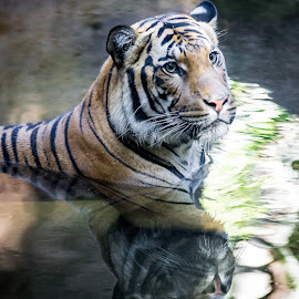 Cat by Robby Ticknor - Animals Lions, Tigers & Big Cats