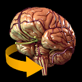 Download Brain 3D Anatomy APK for Laptop