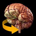Brain 3D Anatomy APK Descargar