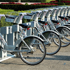For Hire by Tom Gordon - Transportation Bicycles ( project, bycicle, fitness, stand, rental, hire )