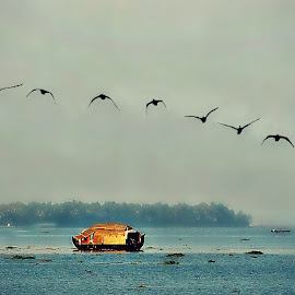 Flight of Cormorants by Tamsin Carlisle - Digital Art Places ( haze, water, lake, kerala, boat, dusk, flock, island, sky, blue, cormorants, india, evening )