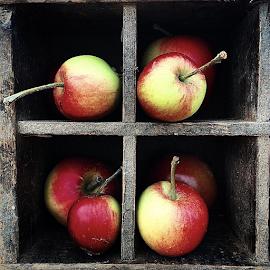 Apples in squares by Jens Thelander - Food & Drink Fruits & Vegetables