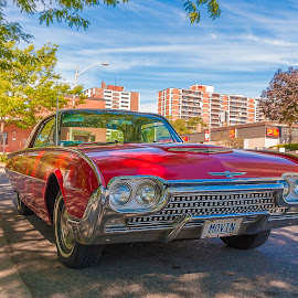 We'll have fun fun fun by Jack Brittain - Transportation Automobiles ( car, red, canada, automobile, street, 1963, ontario, transportation, classic, mississauga, t-bird )
