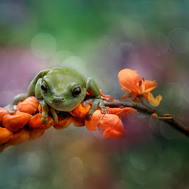 colorfull by Alonk's Roby - Animals Amphibians ( amphibi frog canon )
