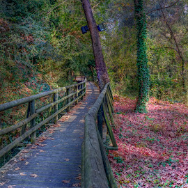 Maaras by Stratos Lales - City,  Street & Park  City Parks ( park, autumn, path, trees, leaves )