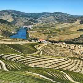 Douro Valley by Antonio Amen - Landscapes Mountains & Hills