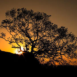 End of another Glorious Day. by Carl Müller - Landscapes Sunsets & Sunrises ( tree, silhouette, shadow, sunset, sun )