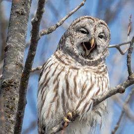 by Steve Hogan - Animals Birds