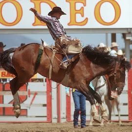 Bronco Rider by Jim Downey - Sports & Fitness Rodeo/Bull Riding ( horseback, rodeo, contest, midair, wild bronco )