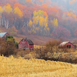 Autumn Farm by Dean Ramsay - Landscapes Prairies, Meadows & Fields ( farm, autumn, fall, barns )