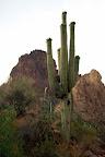 Phoenix til Globe 002.jpg