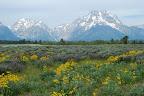 Yellowstone og omegn 245.jpg