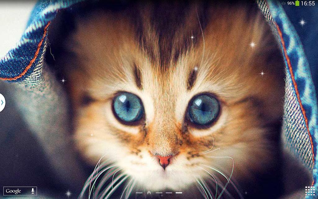 скачать милых котят картинки