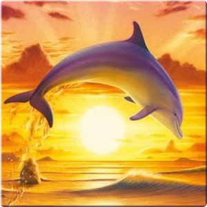 App Dolphin Wallpaper 3D FREE APK for Windows Phone Android