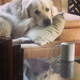 Morning coffee with Miles by Tonya Levy - Animals - Dogs Playing