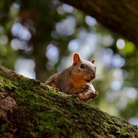 Sweet reward by Zeralda La Grange - Animals Other ( #nature, #animal, #tree, #wildlife, #squirrel )