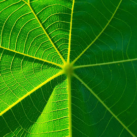 Fibonacci Ratios by Danny Leong - Nature Up Close Leaves & Grasses