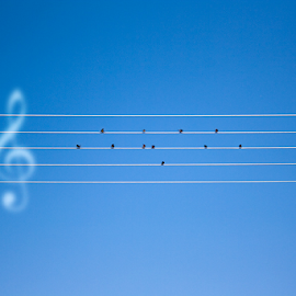 Preludium to vacation by Goran Kojadinovic - Digital Art Abstract ( blue sky, vacation, wires, preludium, symphony, birds )