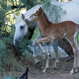 Sharing a Secret by Sue Cullumber - Animals Horses ( wild, equine, nature, horses, horse, wildlife, mammal, animal )