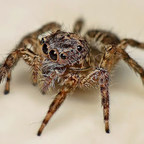 by Helnis Susanto Johannis - Animals Insects & Spiders (  )