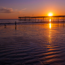 Sunset Walk by Jim Downey - Landscapes Sunsets & Sunrises ( cayugas pier, ripples, dog walk, low tide, beach )