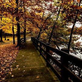 Trail... by Rajeev Krishnan - City,  Street & Park  City Parks ( park scene, nature, park, autumn, fall, trail, autumn colors )