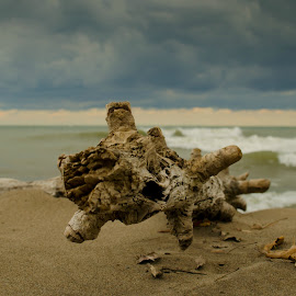 Driftwood Beach by Tim Faust - Landscapes Beaches ( clouds, driftwood, weather, beach, storm )