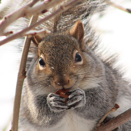 Squirrel by Tina Marie - Animals Other Mammals ( squirrel,  )