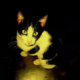 kitty by Tint Agay - Animals - Cats Kittens ( cats, black and white, dark background )