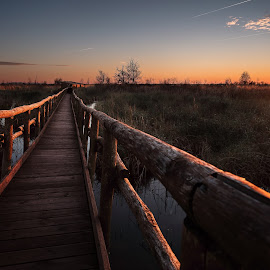 Ultima luce by Raffaello Terreni - Landscapes Sunsets & Sunrises ( water, last, wood, colors, quiet, soft, field, fence, sky, sunset, hot, trees, light )