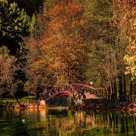 Vrelo Bosne by Jadran Korać - Landscapes Forests ( fall, color, colorful, nature )