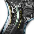 Free Download Anatomía preguntas de examen APK for Samsung