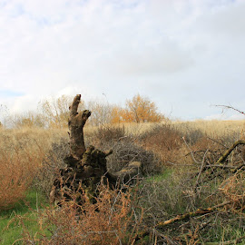 by Rosario Capetillo - Landscapes Prairies, Meadows & Fields