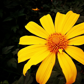 by Chine Balinto - Nature Up Close Gardens & Produce ( sunflower )