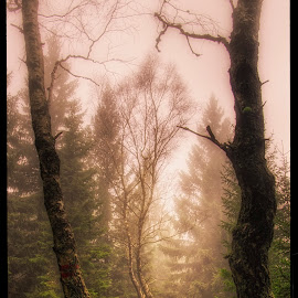 trees on Popelná hora by Petr Klingr - Landscapes Forests ( foggy, hdr, trees, sunshine, ribbon tree )