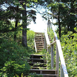 Stairway  by Patti Martin - Buildings & Architecture Other Exteriors
