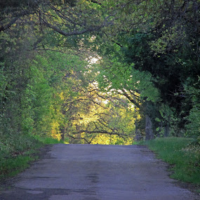 The light at the end of the tunnel by Jamie Hodge - Landscapes Travel ( happy, trees, road, sun,  )