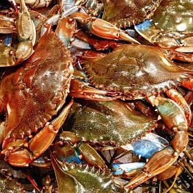 Maryland Crabs.jpg